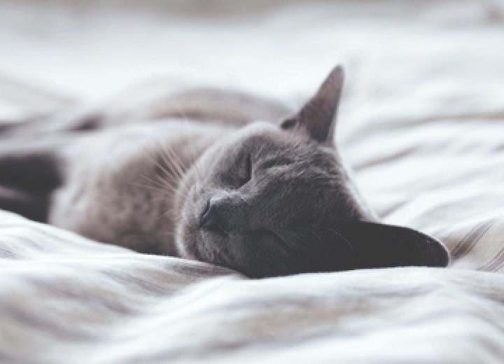 5 mythes à déboulonner sur l'apnée du sommeil