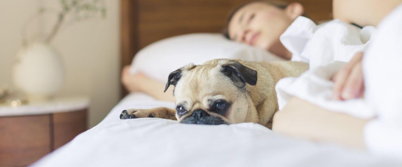 L'apnée du sommeil et son dépistage expliqué par une de nos inhalothérapeutes