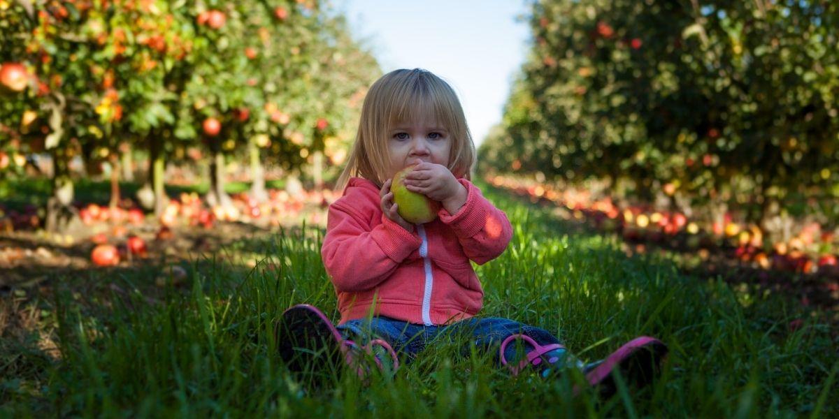 verger enfant pomme